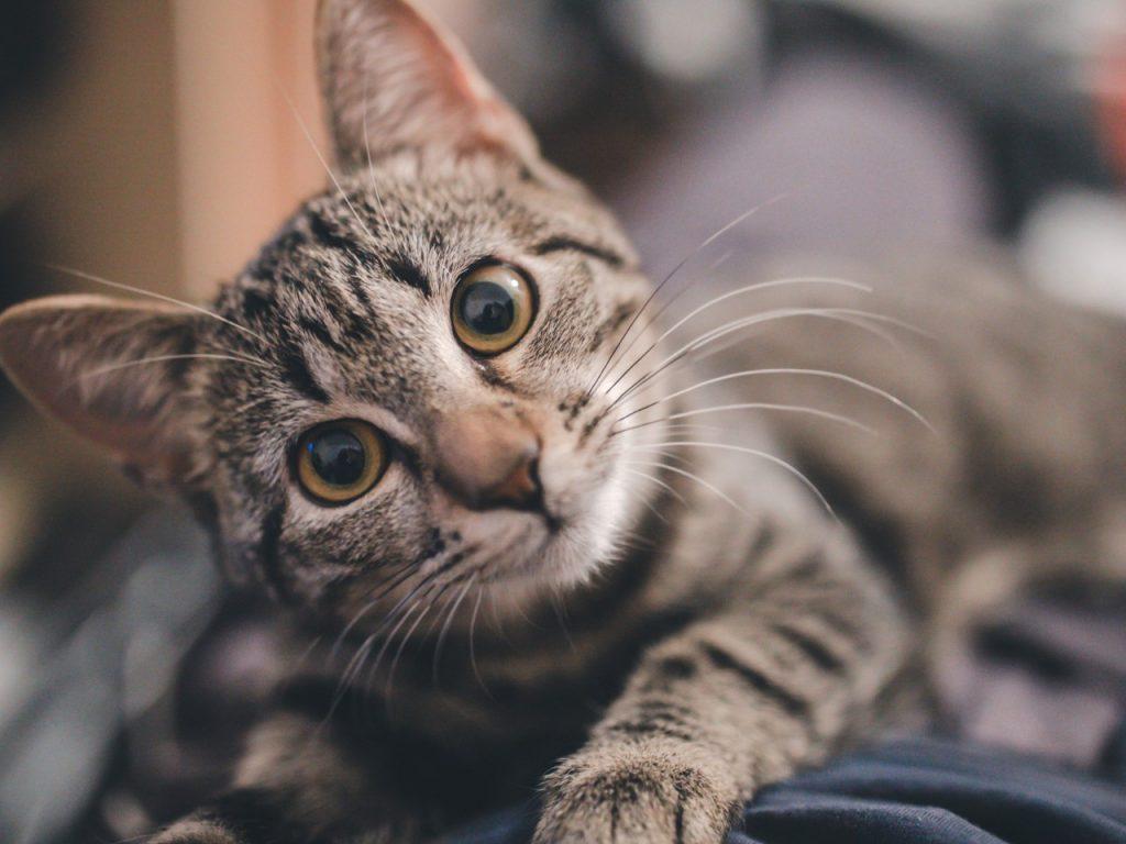 cat with head sideways