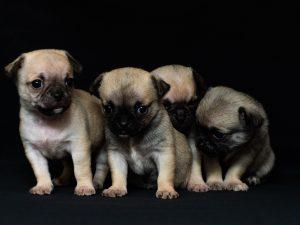 dark puppy pics