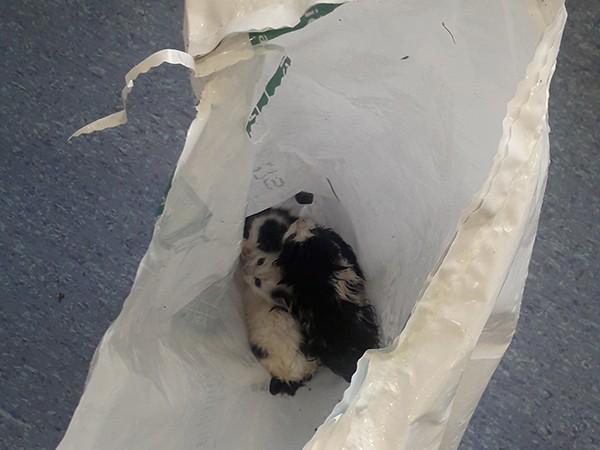 kittens in white bag