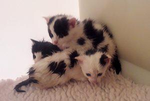 three wet kittens
