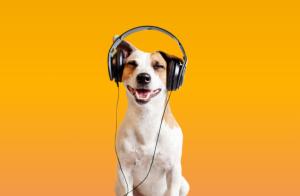 dog with headphones yellow background