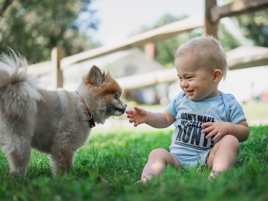 little boy with puppy on grass