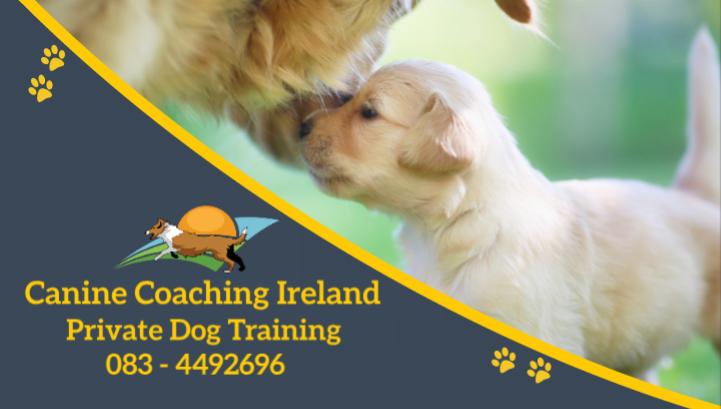 Canine Coaching Ireland Card