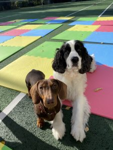 two dogs on play mat