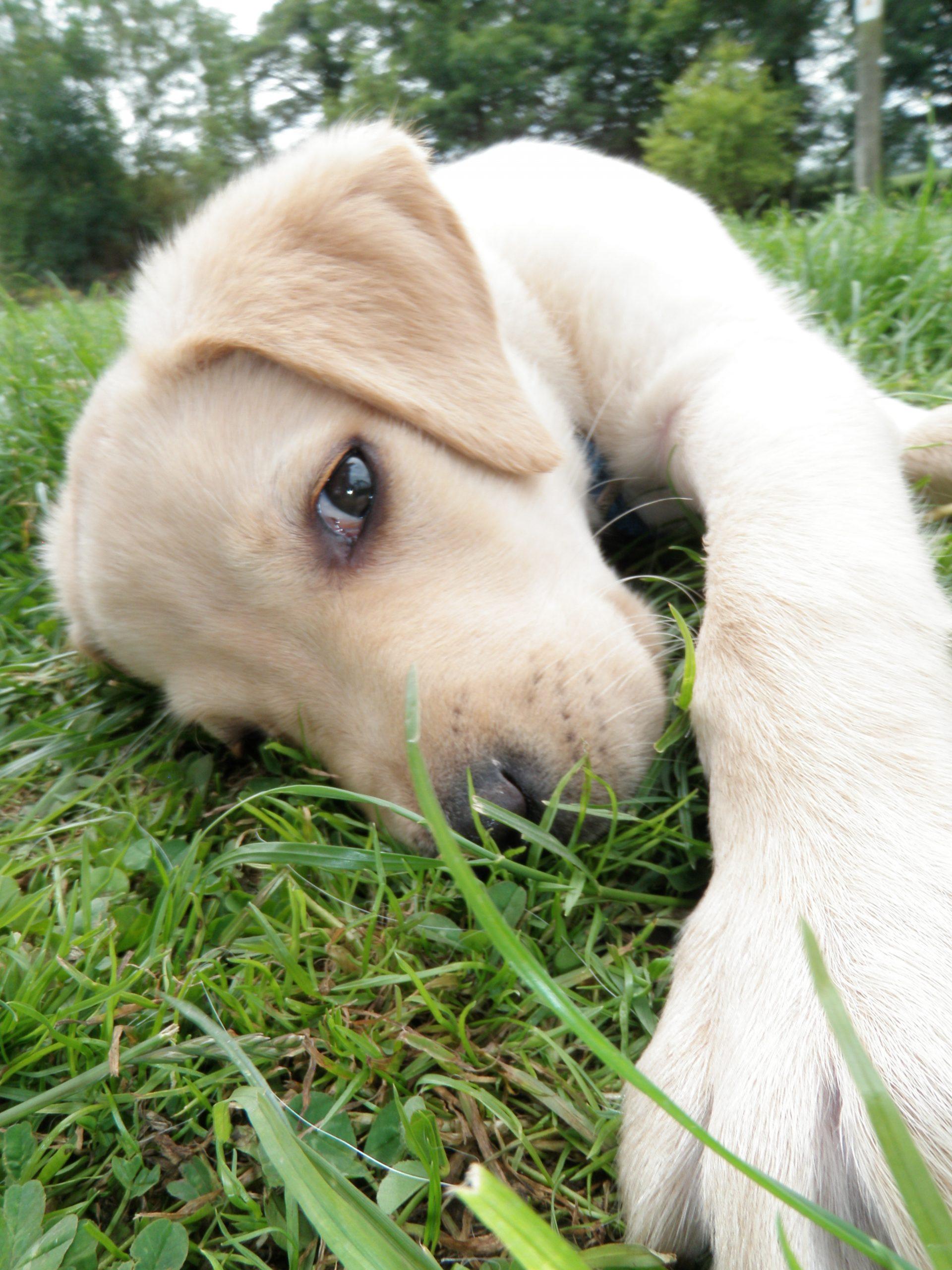 Hollybarn Dog and Puppy Training