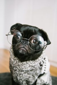 black dog with glasses