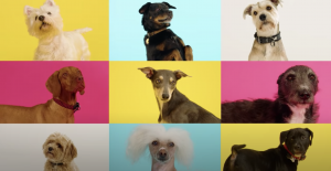 dogs on colourful backgrounds
