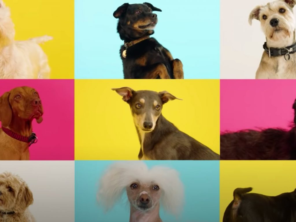 colourful dogs