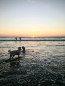 two dogs swimming in the sea