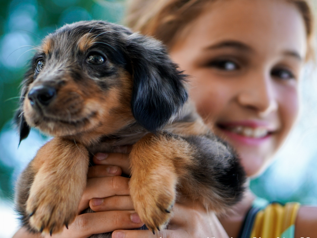 girl holding brown and black puppy