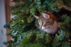 cat peeking out of tree