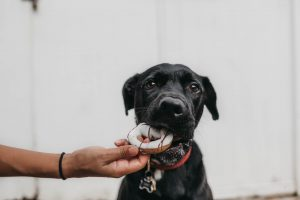 black dog with donut in mouth