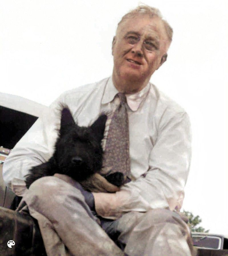 franklin d roosevelt and dog fala