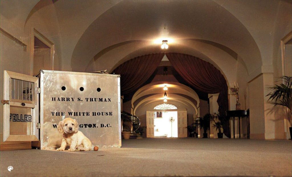 Harry Truman Feller dog