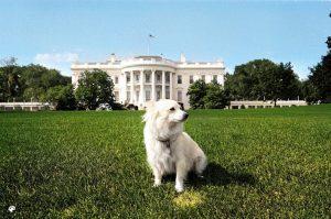White dog at white house