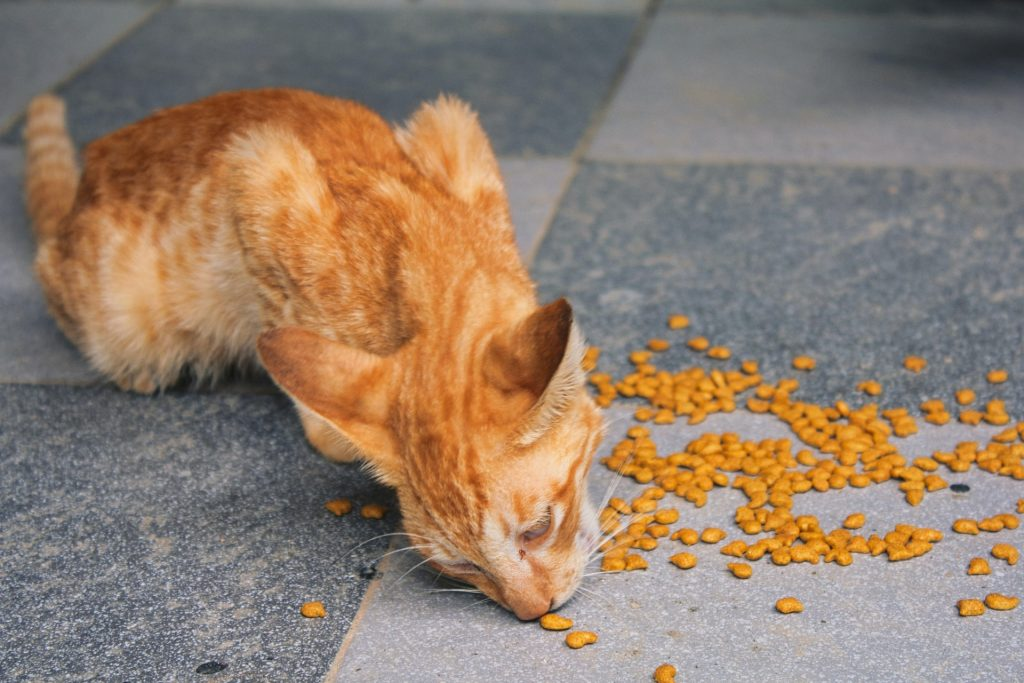 cat eating dry food off floor