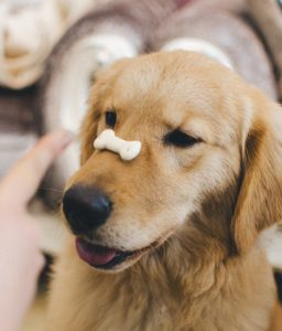 dog with biscuit on nose