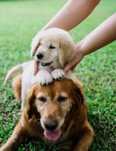 puppy on top of dog on the grass