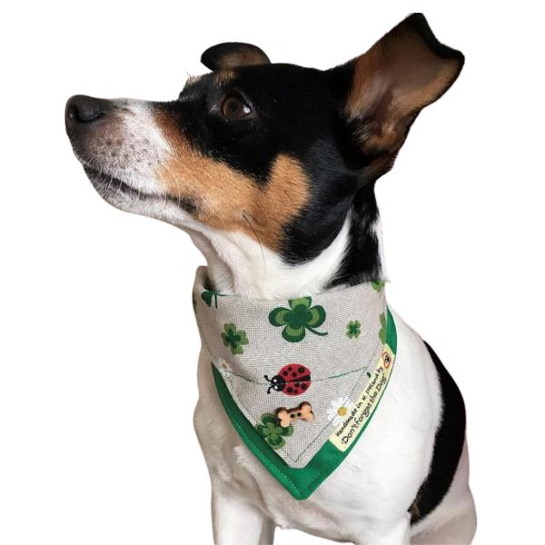 Dog wearing bandana for st.patricks day