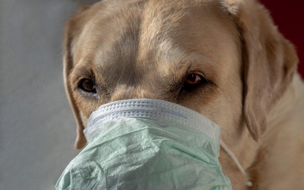 dog wearing a face mask