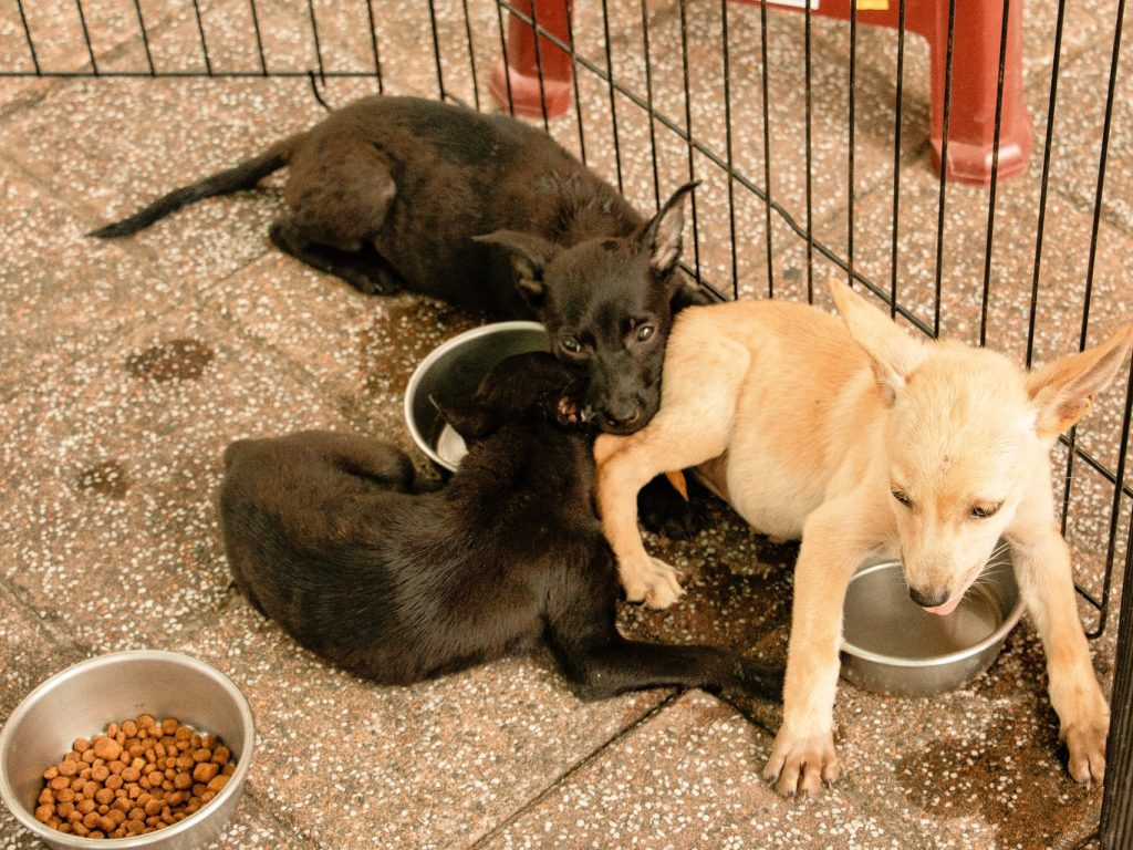 dogs in cage with food bowl