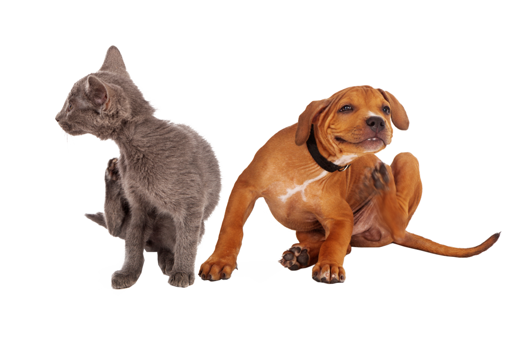dog and cat itching fleas