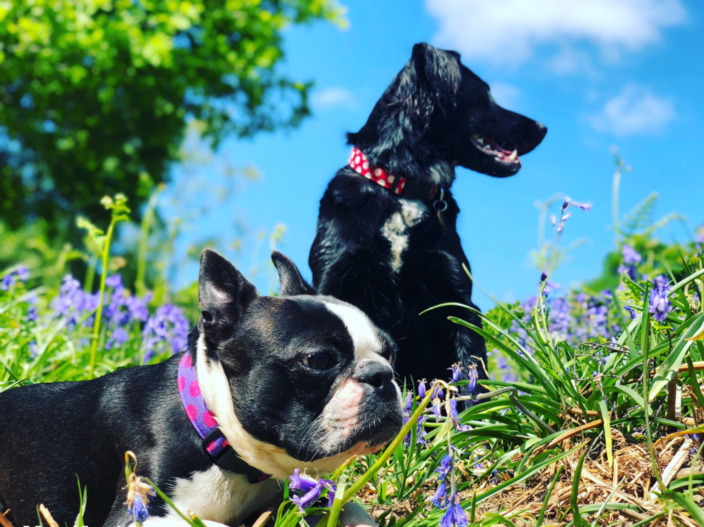 two black dogs in the grass