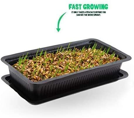 Vitakraft cat grass seads