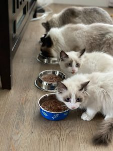 A guide to changing cat food