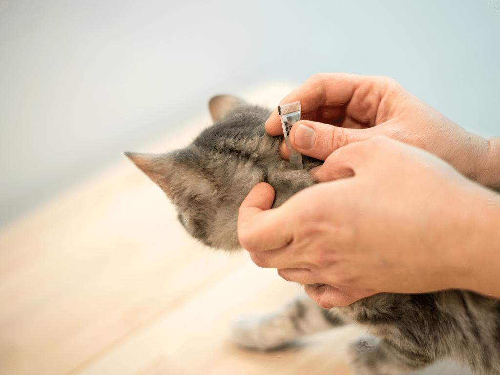 Cat been given flea treatment