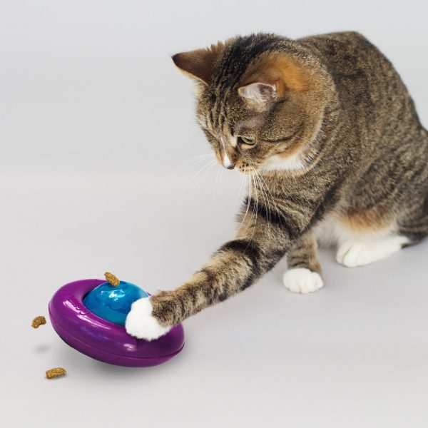 KONG cat playing with kong gyro toy