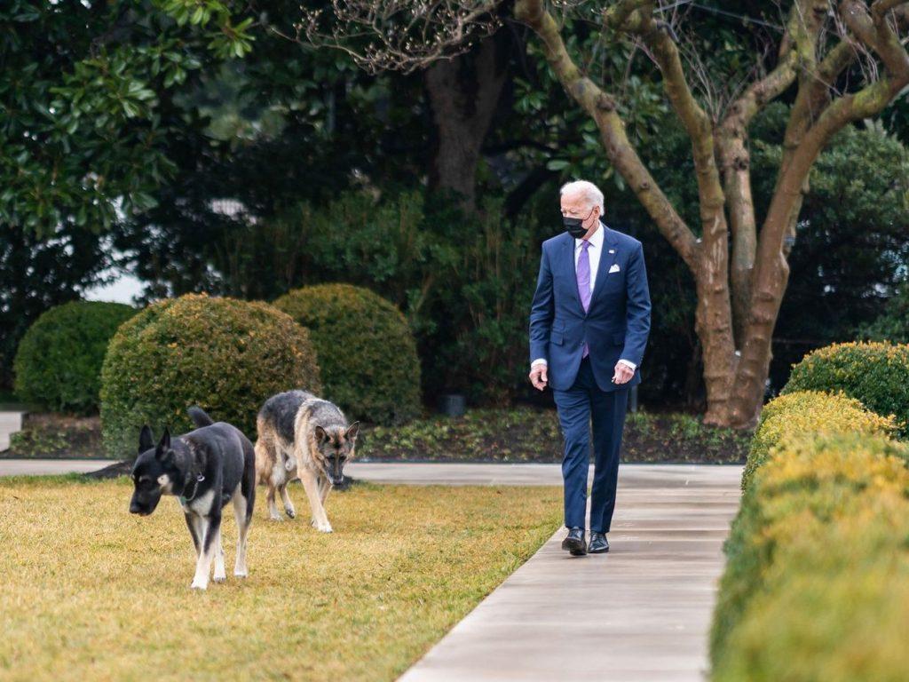 joe biden walking with his two dogs wearing a mask