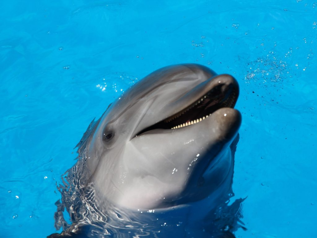 happy dolphin in water