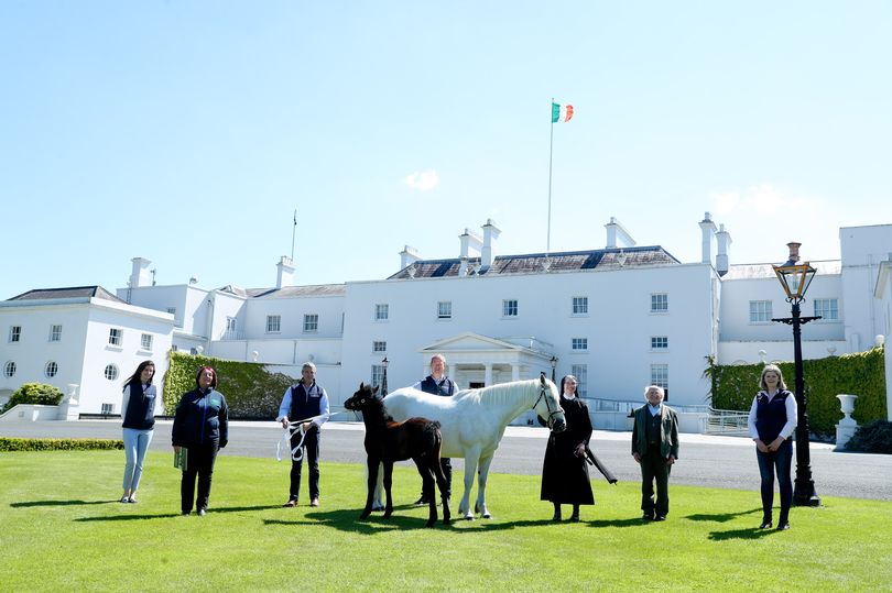 President Michael D Higgins with new ponies