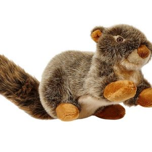 Nuts Squirrel