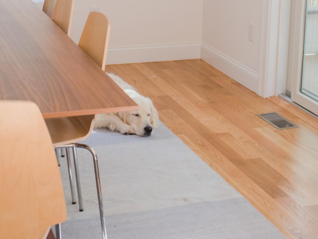 dog lying on wooden floor