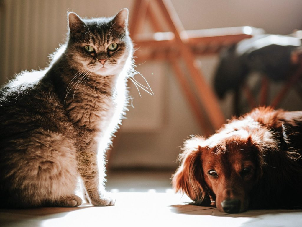 dog and cat sitting on the floor in the dark