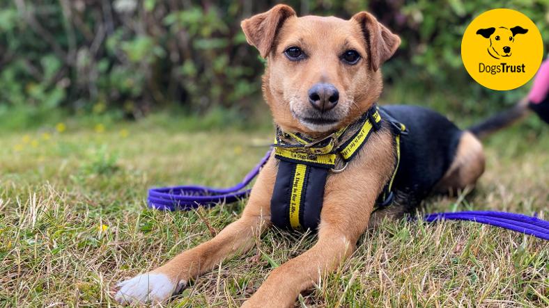 dogs trust bella tiny terrier