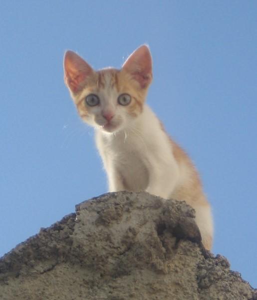 Kitten Animal cruelty